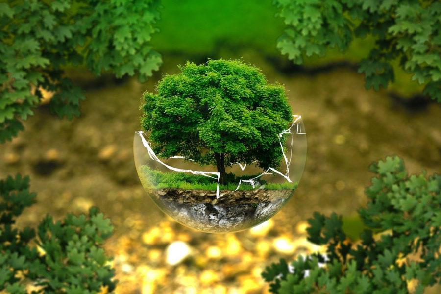 sostenibilidad medio ambiente cambio climático